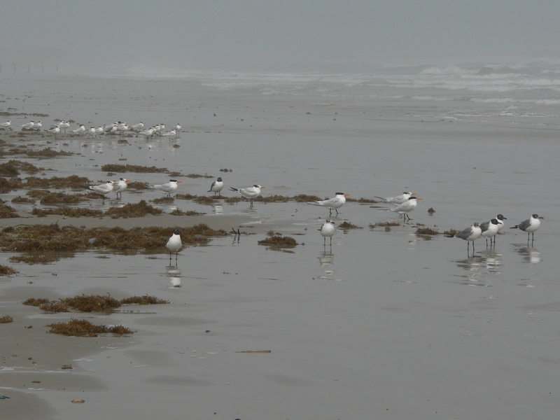 bunch-of-sea-gulls