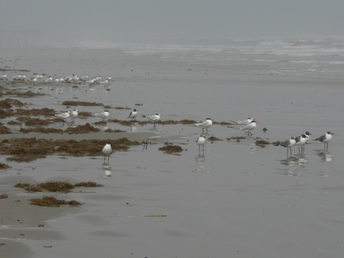 bunch-of-sea-gulls
