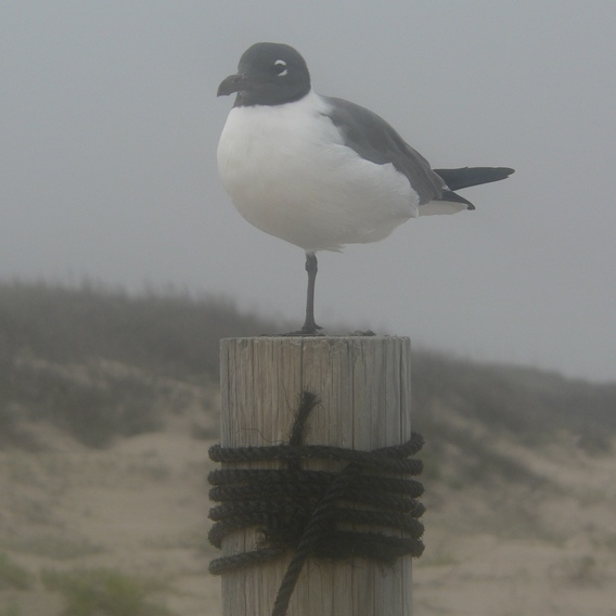 cropped-sea-gull