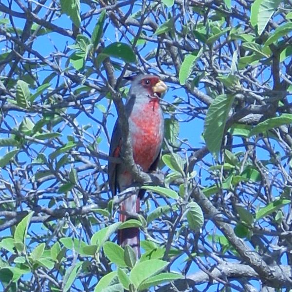 falcon-birds1