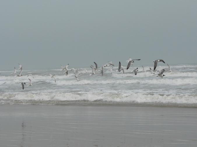flying-sea-gulls