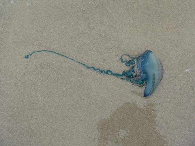 jelly-fish1