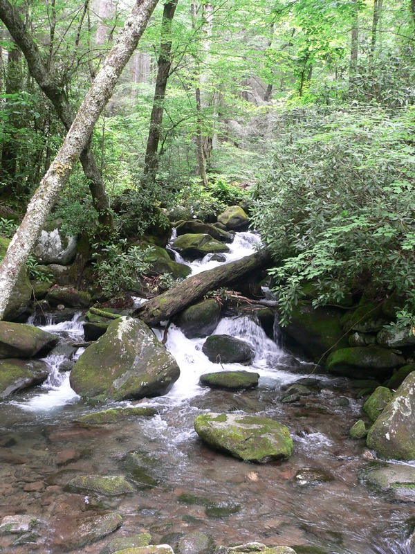 Resized Great Smoky Mountains 042