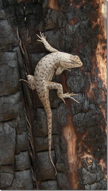 Best Lizard Mesa Verde 008