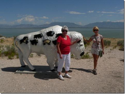Bull Great Salt Lake 035