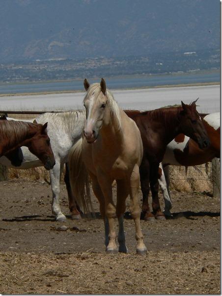 Horse Great Salt Lake 073