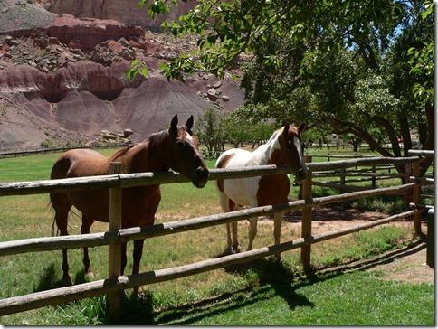 Horses Capitol Reef 031