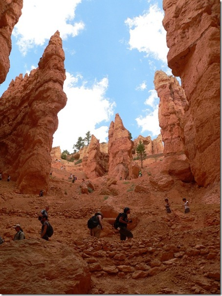 Looking Up Bryce Canyon National Park 029