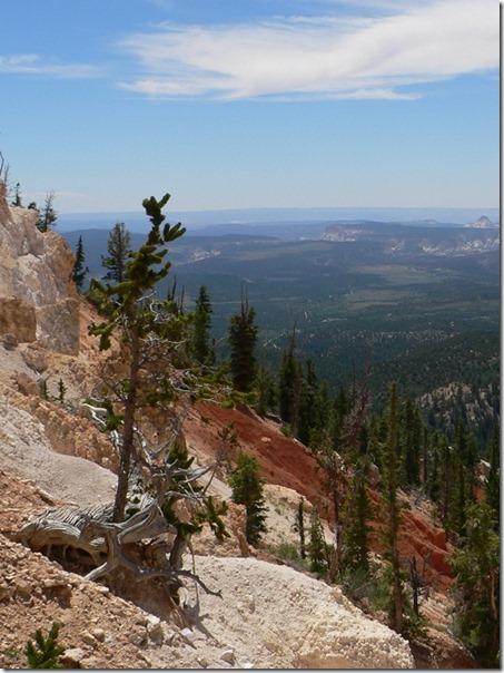 Tree Bryce Canyon 021