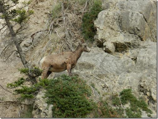 Alaska 2012 022