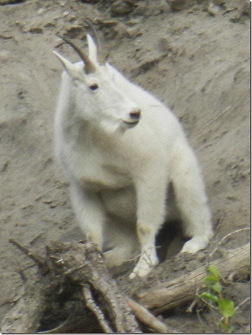 Alaska 2012 046